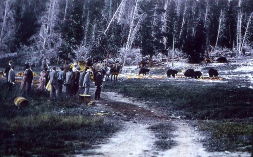 Tourists watching bears.
