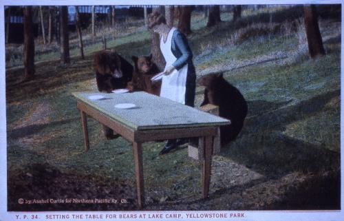 Table for Bears Yellowstone Slidefile Asahel Curtis postcard