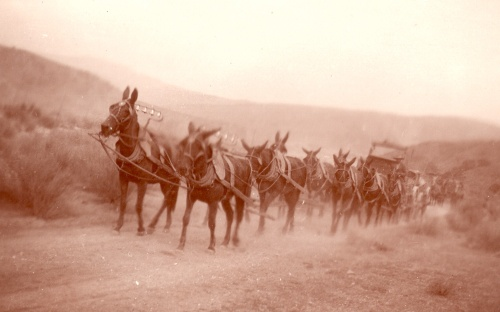 Charles D. Loughrey Mule Train PMB