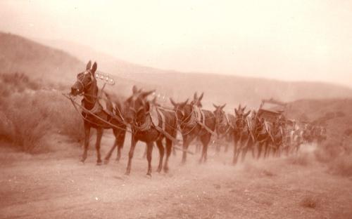 Charles D. Loughrey Mule Train PMB