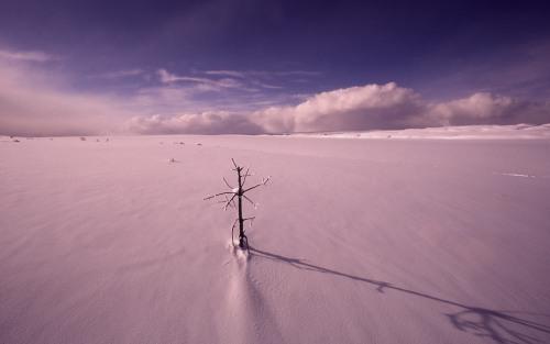 Winter in Hayden Valley Mark Marschal YDSF10248